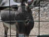 Zoo Split